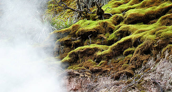 Moss and Steam by Brian Puyear