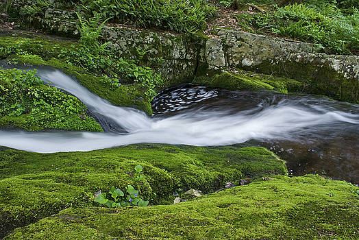 Moss Carpet and Stream by Andrew Kazmierski