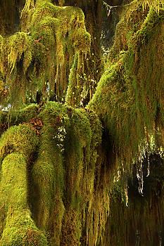 Moss Cloak by David Lunde