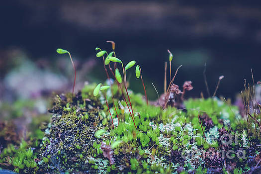 Moss close up 1 by Claudia M Photography