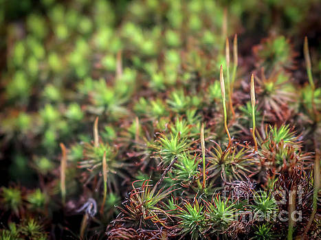 Moss close up by Claudia M Photography
