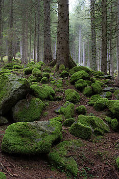 Moss covered rocks by Wim Slootweg