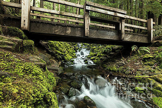 Moss Covered Stream Flows Under a Bridge in Olympic National Par by Brandon Alms