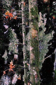Moss Incognito by Ken Ketchum