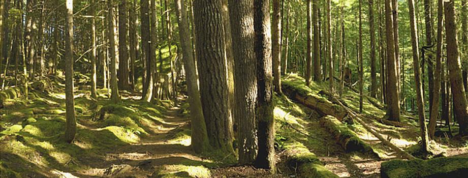 Moss by Larry Darnell