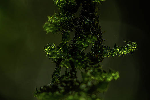 Moss - Light and Shadow by Ramabhadran Thirupattur