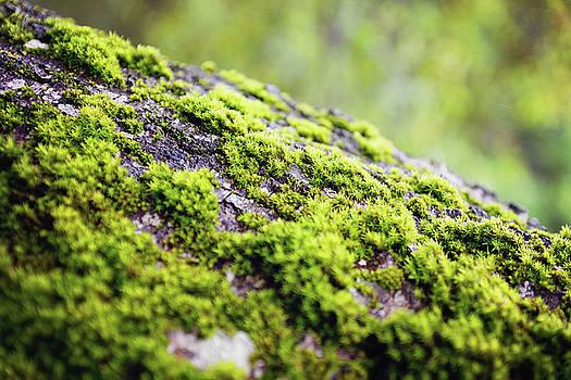 Moss by Megan Swormstedt