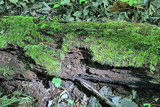 Moss on a Log 2 by Richard Goldman