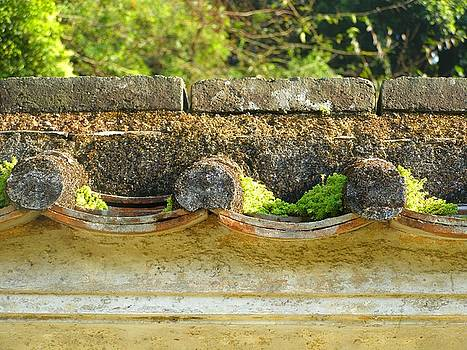 Moss on an old Chinese roof by Kathy Daxon