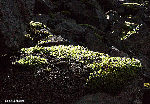 Moss on the Rocks by Edward Coumou