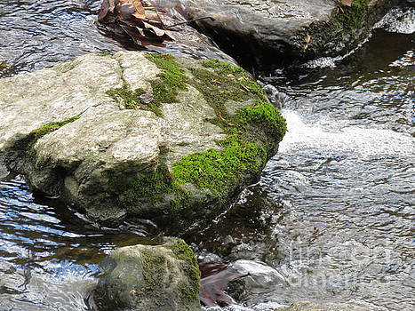 Moss Rock River by Anita Adams