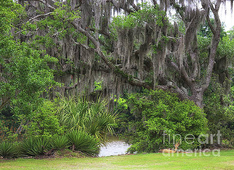 Chuck Kuhn - Moss Tree Beauty
