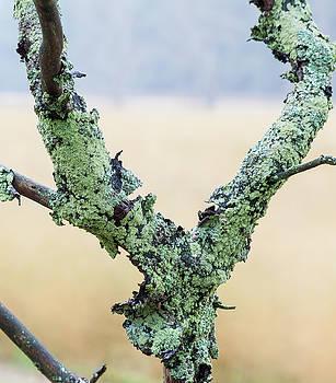 Mossy Branch by Fran Riley