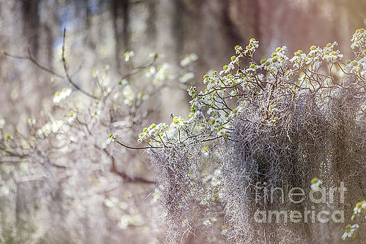 Mossy Dogwoods by Joan McCool
