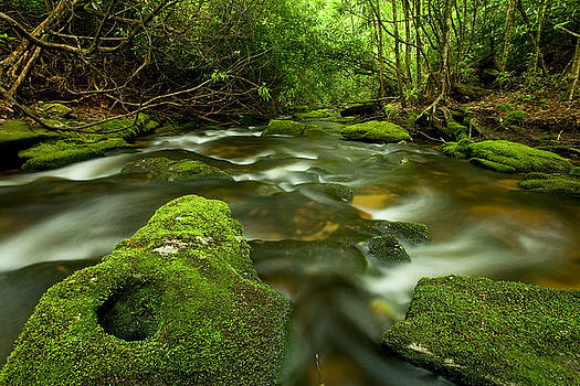 Mossy Rainforest Stream by Matt Tilghman