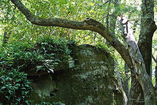 Darlene Bell - Mossy Rock