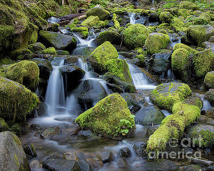 Mossy Rocks Hoh Rain Forest by Jerry Fornarotto
