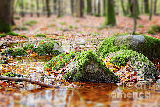 Mossy rocks in swamp by Sophie McAulay