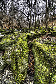 Mossy Trail by Steven Wilson