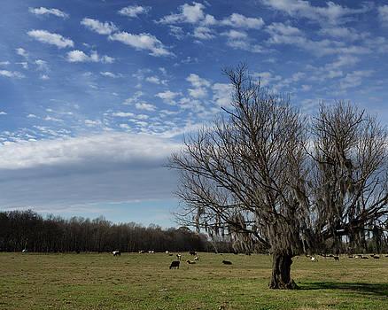 Mossy Tree by Daryl Clark