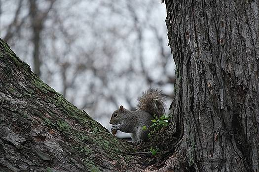 Gothicrow Images - Squirrel In The Mossy Tree