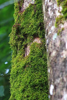 Mossy Tree by L L