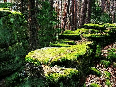 Mossy Wall by Digital Art Cafe