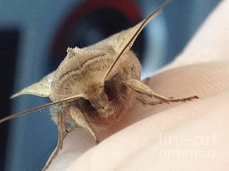 Moth Face by Iris Newman