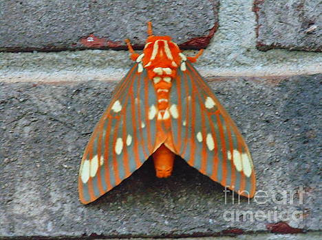 Moth by Ginny Youngblood