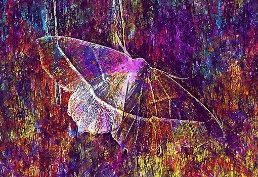 Moth Macro Insect Lepidoptera Leaf  by PixBreak Art