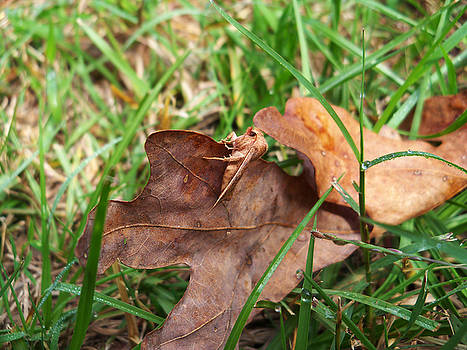 Moth On Leaf by Karen Roberson