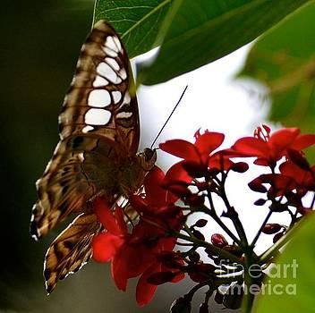 Moth  by Stephanie  Bland