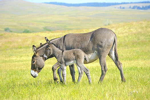 Mother and Baby Burro by Donald Fink
