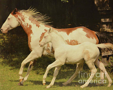 Mother and Baby Colt by Ruth Housley