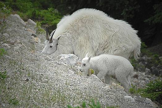 Mother and Baby   by Dyle   Warren