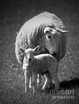 Mother and Daughter by Clare Bevan