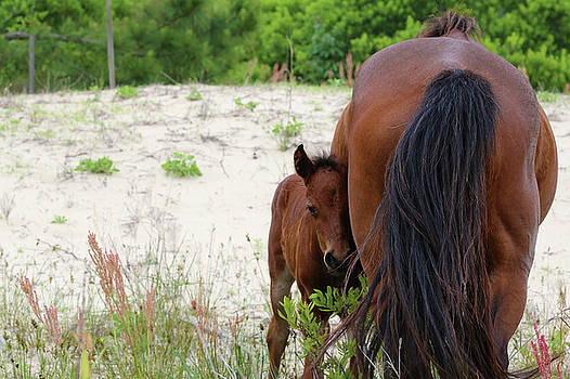 Mother and Foal by David Stasiak
