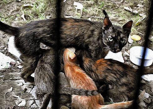 Bliss Of Art - Mother Cat