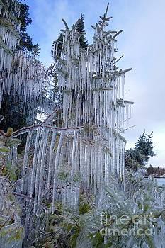 Mother Nature's Christmas Tree by Sandra Updyke