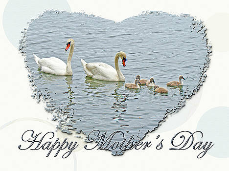 Mother Nature - Mothers Day - Mute Swan Family