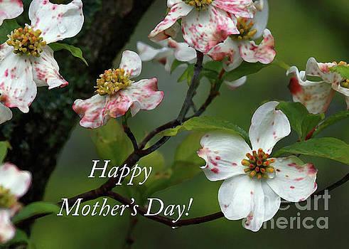 Mother's Day Dogwood by Douglas Stucky