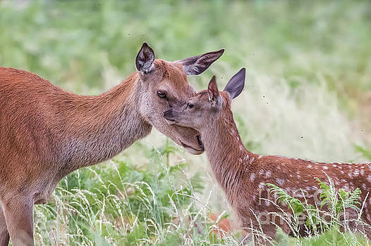 Mothers Love by Paul Farnfield