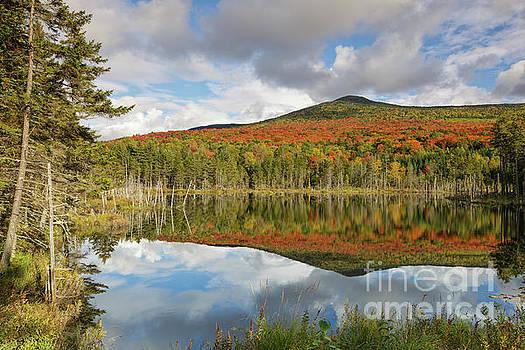 Mount Deception - Carroll New Hampshire by Erin Paul Donovan