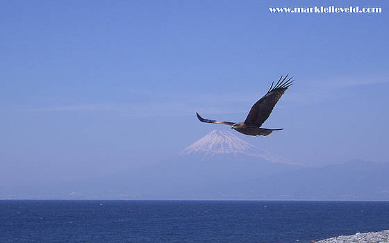 Mount Fuji with Eagle by Mark Lelieveld