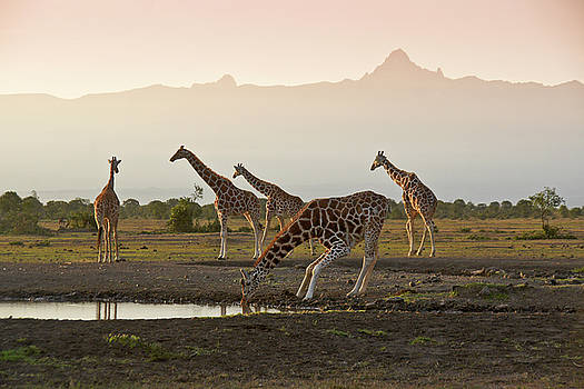 Michele Burgess - Mount Kenya with Giraffes