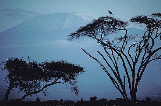 Mount Kilimanjaro in Kenya by Carl Purcell