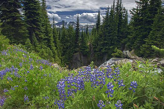 Rick Berk - Mount Rainier Meadow