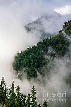 Mount Rainier National Park Clouds and Forest by Mike Reid