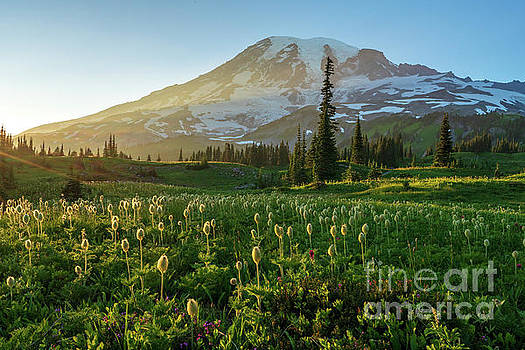 Mount Rainier Photography Golden Meadows of Wildflowers by Mike Reid