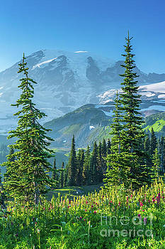 Mount Rainier Photography Meadows of Bliss by Mike Reid